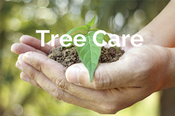 Colorado Springs Tree Care