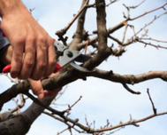 Winter Tree Pruning in Colorado