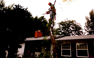 Licensed tree service in Colorado Springs