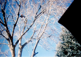 Colorado tree service
